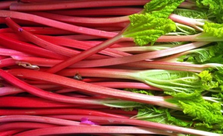 blog-image-rhubarb-large-1