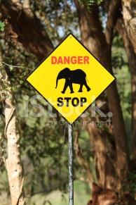 21713666-elephant-danger-sign