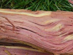 cedar-wood-2