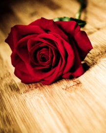 Red-Rose-tall-l