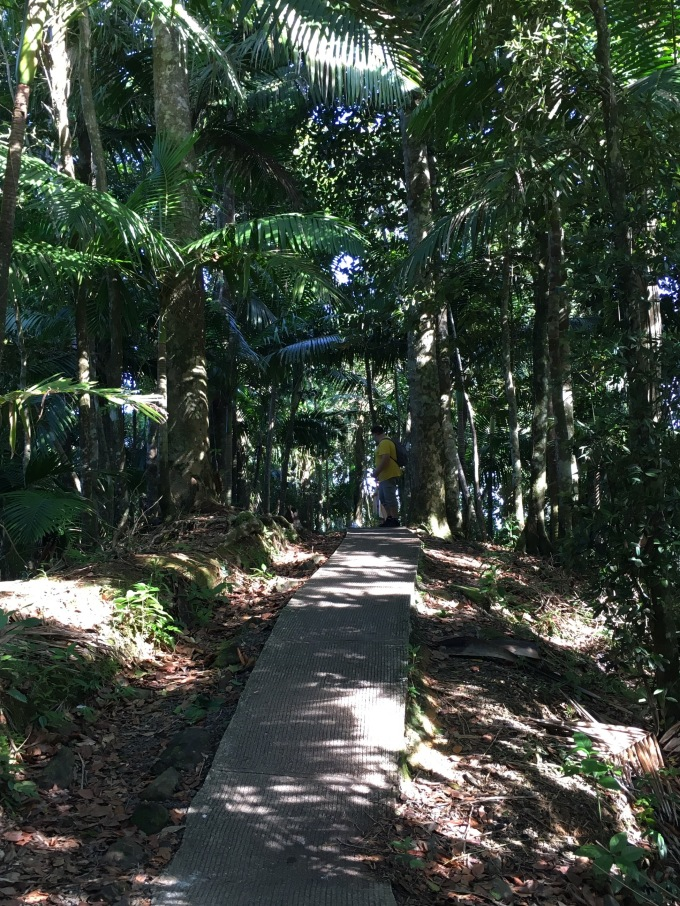 Regnskogen El Yunque. Underbar doft av våt mark och växter.