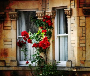 Nature Red House Window Popular Beautiful Roses Building Flowers Photography Flower Wallpapers Hd For Mobile